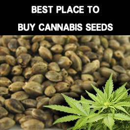 The Best place to buy cheap cannabis seeds in 2020