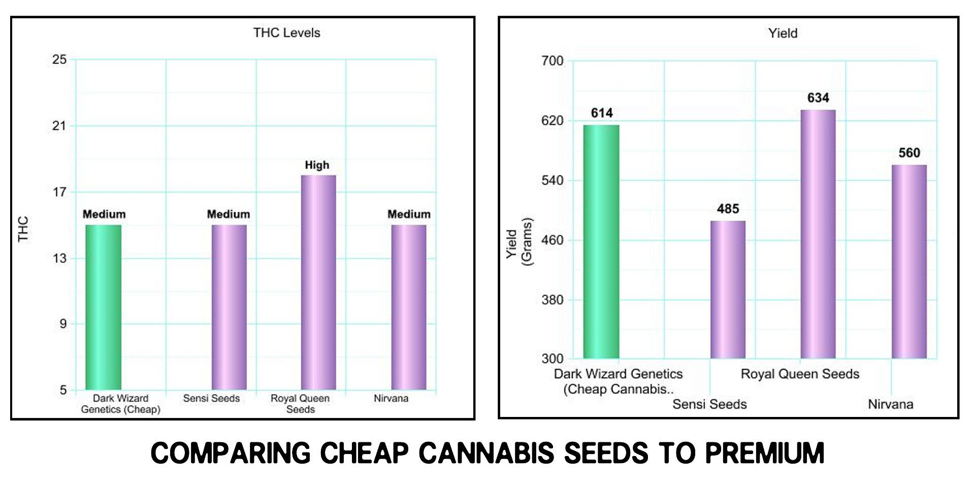 cheap cannabis seeds compared